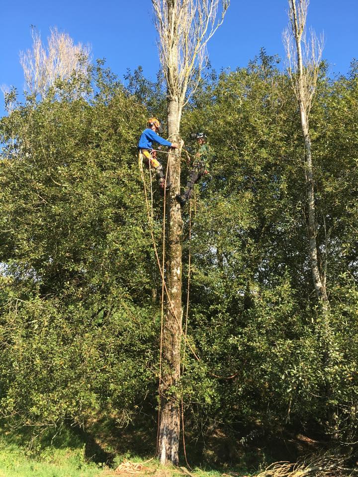 Pittman Trees - Tree Surgeons – Tree Surgery - Forestry Contractors